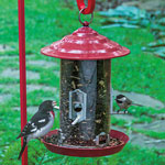 Raspberry Red Feeder