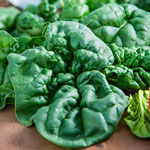 Bloomsdale Long Standing Spinach