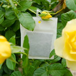 Aphids Away! Rose Protector