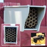 Mason Bee Nest Kit