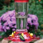 Ant Moat Hummingbird Feeder