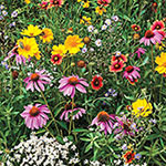 Bee-Friendly Flower Mix