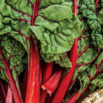 Organic Ruby Chard Salad Greens