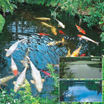 Watergarden & Pond Beneficial Bacteria Tablets