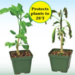 Frost Patrol® Plant Protector