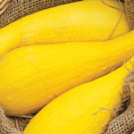 Container Easypick Gold Squash