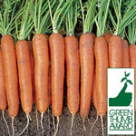 Square Foot Gardening Seed Mat-Carrot Envy