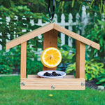 Orange and Jelly Feeder