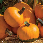 Container Batwing Pumpkin