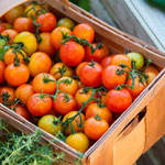 Container Red Profusion Tomato