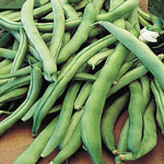 Organic Blue Lake 274 Bush Beans