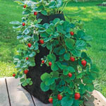 Grow Tub™ Strawberry Tower™ U.S. Patent No. 9253949