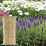 Flowers Alive!™ for Perennials