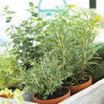 Herbs Alive!™ Fertilizer