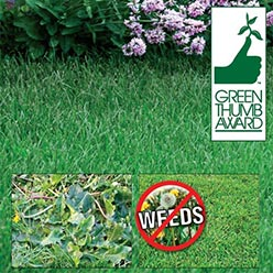 Iron X!™ Selective Weed Killer For Lawns - Buy Three Get One Free!