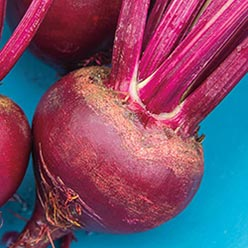 Red Ace Beet