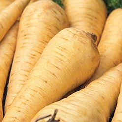 All-American Parsnip