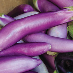 Container Oriental Fingerling Eggplant