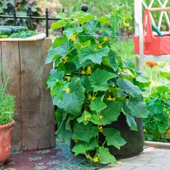 Grow Tub™ Container Fertilizer for Vegetables and Ornamentals