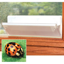 Asian Lady Beetle Trap & Refill