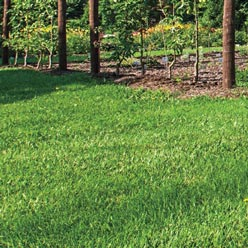 All-Natural Fall Lawns Alive!® Fertilizer