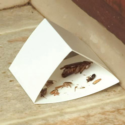 Sure-Catch™ Cockroach Trap