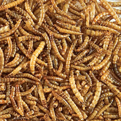 Redi-Meal™ Mealworms