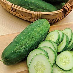 Organic Straight Eight Cucumber