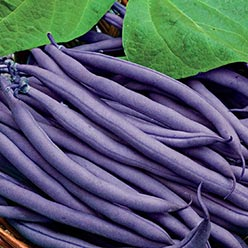 Organic Dow Purple Pod Bean