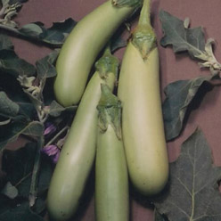 Organic Louisiana Long Green Eggplant