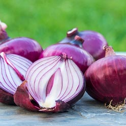 Red Candy Apple Hybrid Onion