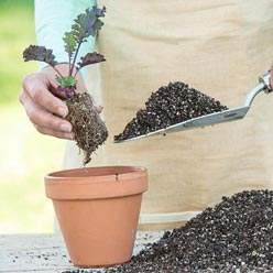 Perfect Start™ Natural Potting Soil