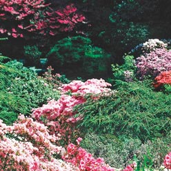 Shrubs Alive!™ Fertilizer for Trees and Shrubs